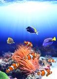 Havsanemon och clownfisk Royaltyfri Fotografi