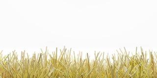 Havsanemoner på vit bakgrund Royaltyfria Bilder