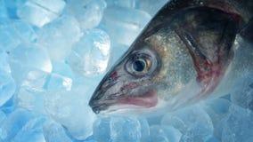 Havsbas på is lager videofilmer