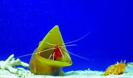 Havsbotten Arkivfoto