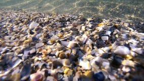 Havsbotten med skal och vågor stock video