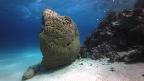 Havsbotten som djupt är undervattens- i Röda havet lager videofilmer