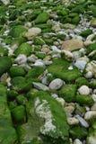 Havsbotten stenar gröna alger royaltyfria foton