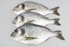 Havsbraxen för rå fisk Fotografering för Bildbyråer