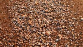 Havsdetaljer Fotografering för Bildbyråer