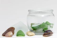 Havsexponeringsglas och skal i bunke royaltyfri bild