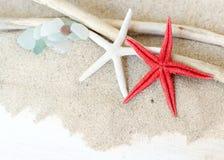Havsexponeringsglas, sjöstjärna och trä - tropiskt lopp arkivbild