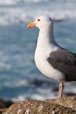 Havsfågel Arkivbild