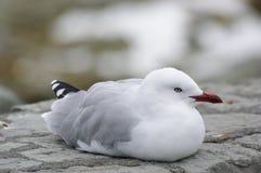 Havsfågel Royaltyfri Foto