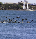 Havsfåglar Arkivfoto