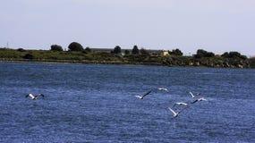 Havsfåglar Royaltyfria Bilder