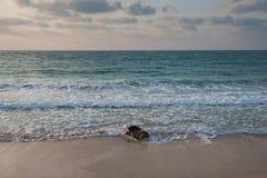 Havsförorening Royaltyfria Foton