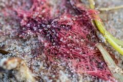 Havsförorening på stranden med ett avfallfisknät fotografering för bildbyråer