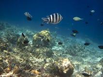 Havsfisk arkivfoton