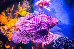 Havsfisk och korall Royaltyfria Bilder