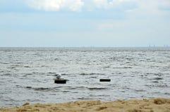 Havsfiskmås på den korta träpelaren i havet royaltyfria bilder
