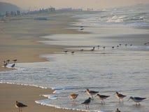 Havsfiskmåsar i havsvatten på en strand Arkivbilder