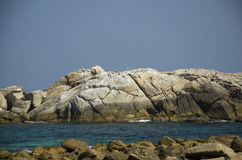 Havsfiskmåsar på en stor vit vaggar Fotografering för Bildbyråer
