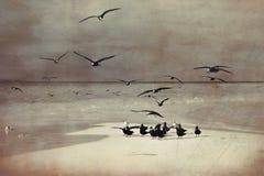 Havsfiskmåsar på kust av en bank på Maldiverna Arkivbilder
