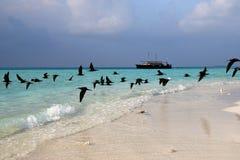Havsfiskmåsar på kust av en bank på Maldiverna Arkivfoton