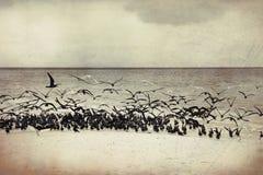 Havsfiskmåsar på kust av en bank på Maldiverna Royaltyfri Bild