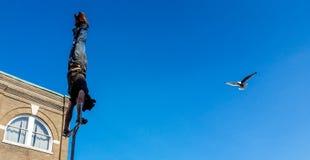 Havsfiskmåsen skjuta i höjden in för att kontrollera ut gataaktören som gör handställningen Arkivbilder
