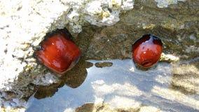 Havsfrukt royaltyfri fotografi