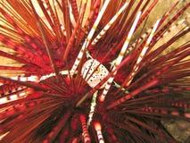 havsgatubarn Royaltyfria Bilder