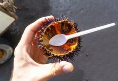 Havsgatubarn med kaviaren, innan att äta Ny skaldjur på att fiska marknaden arkivfoto