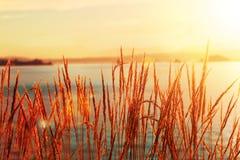 Havsgräs silhouetted med havet Arkivfoton