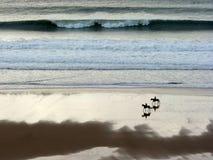 Havshästar arkivbild