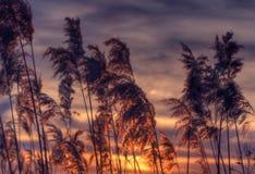 Havshavre Arkivfoto