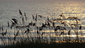 Havshavre #8 Fotografering för Bildbyråer