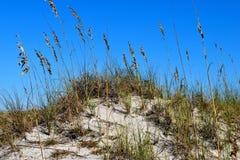 Havshavre på stranden royaltyfri bild