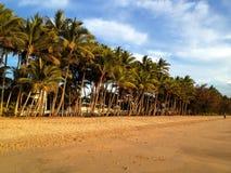 Havsikt och palmträd Fotografering för Bildbyråer