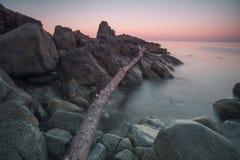 Havsklippor, ett stupat träd ashore Arkivbilder