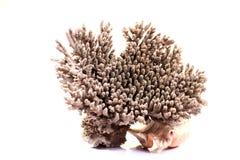 Havskorall arkivfoto