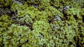 Havskoraller i tropiskt vatten royaltyfri fotografi