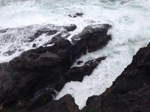 Havskrubbsår Fotografering för Bildbyråer