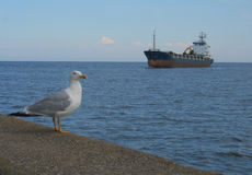 havskust Royaltyfri Bild