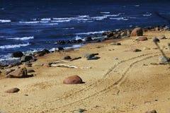 havskust Royaltyfri Fotografi