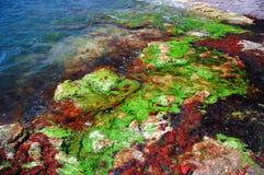 havskust för 4 svart färger Fotografering för Bildbyråer