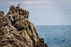 Havskust, Monterosso alsto, Cinque Terre, Italien Arkivbilder