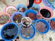 Havsläkarundersökningdjur Royaltyfria Foton