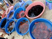 Havsläkarundersökningdjur Royaltyfria Bilder