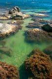 Havslagun med röda alger på stenar Arkivbild