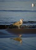 Havslandskap med en Seagull Arkivfoton