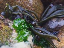 Havsliv i mitt av klippor arkivfoto