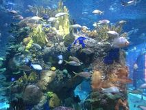 Havsliv i NOLA Arkivbild