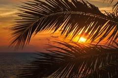 Havsolnedgång som är synlig till och med palmblad arkivbilder